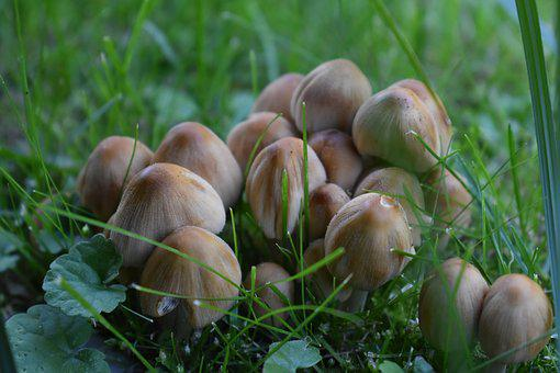 Mushroom, Nature, Autumn, Close Up