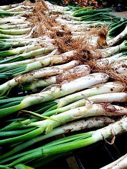 Calçots, Barbecue, Onions, Embers, Lena, People, Valls