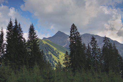 Trees, Firs, Spruce, Austria, Alpine, Mountains, Sky