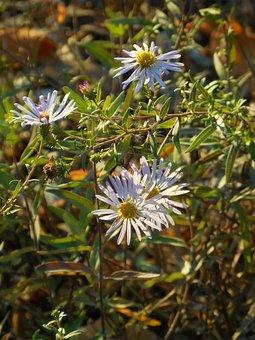 Flowers, Daisy, Spring, Bloom, Daisies, Blossom, Summer