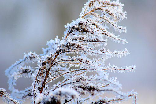 Winter, Frost, January, Frozen, Cold, Crystals, Grass