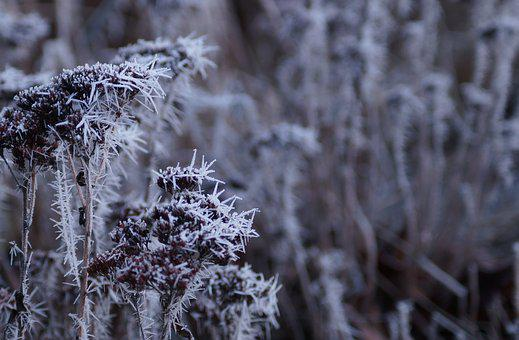 Winter, Cold, Frost, Snow, Nature, Wintry, Winter Magic