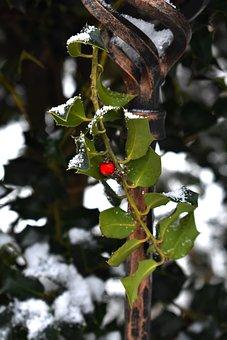 Cezmína, Snow, Winter, White, Green, Red