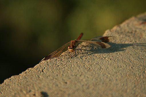 Dragonfly, Nature, Insects, Concrete