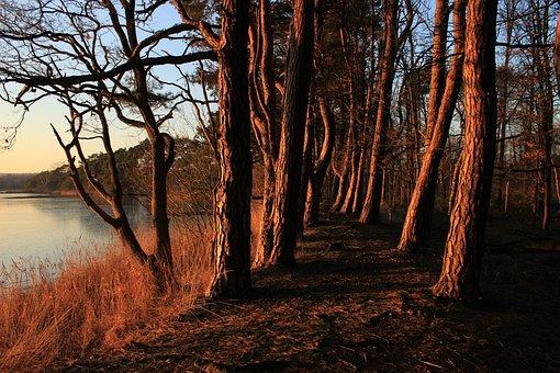 Landscape, Fiery, Fairy Tale, Dark, Tree, Mystical