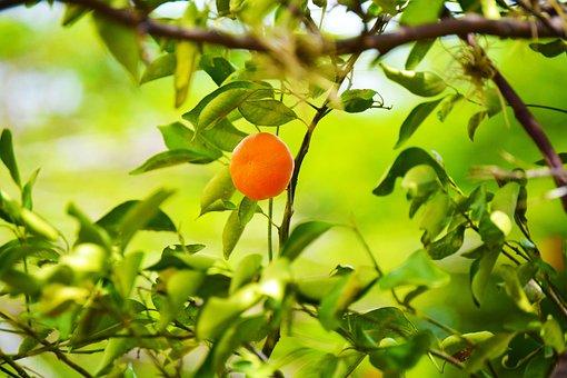 Fruit, Tangerine, Food, Orange