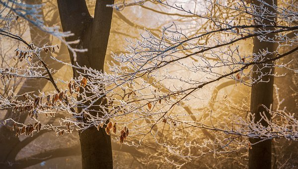 Trees, Branches, Frost, Fog, Frozen, Cold, Ice, Wintry