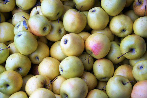 Apples, Harvested, Stored, Green, Yellow, Fruit