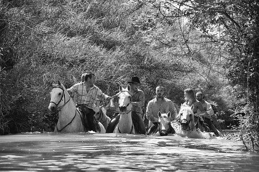 Horse, Water, Jumper, Horseback Riding, Animals, Race