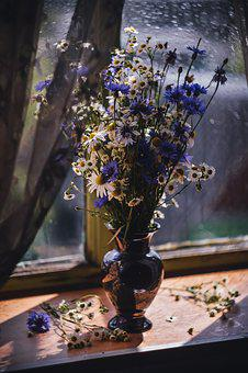 Still Life, Knapweed, Chamomile, Window, Light, Bouquet