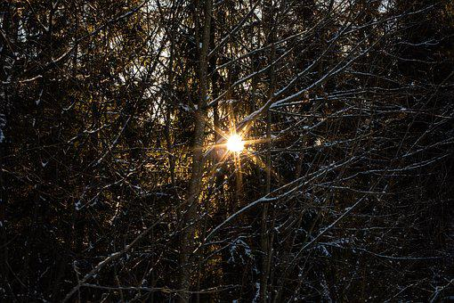 Sun, Wood, Nature, Landscape, Sky, Forest, Shadow