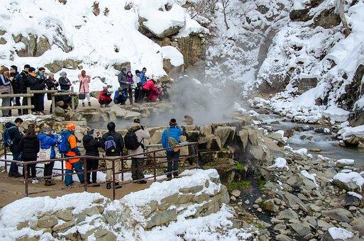 Snow Monkey, Japanese Macaque, Japan, Winter, Bathing