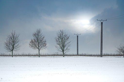 Snow, Trees, Winter, Landscape, Cold, White, Scenic