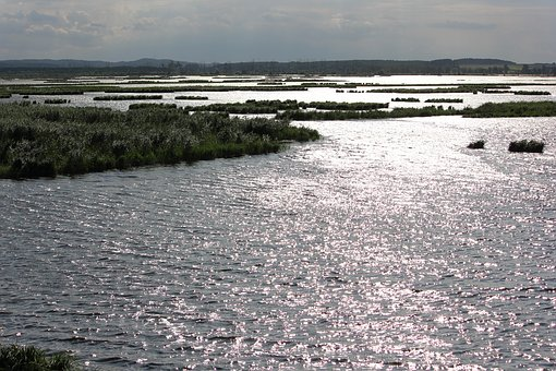 Backlighting, Flooding, The Breeding Area, Water