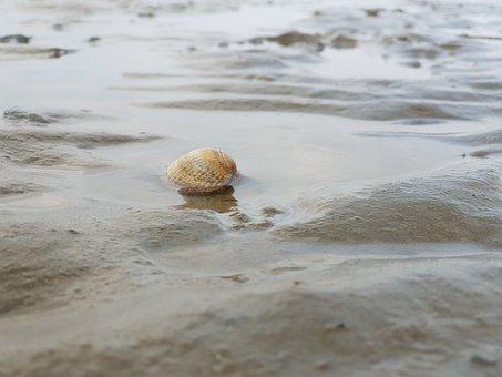 Shell, Sea, Watts, Sand, Beach, Water, Mussels, Ocean