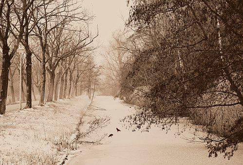 Canal, Frozen, Ice, Snow, Winter, Tree, Cold, Snowy
