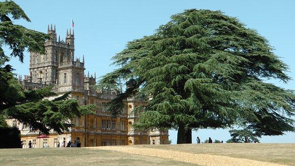 Downtown Abbey, England, Castle, Tree