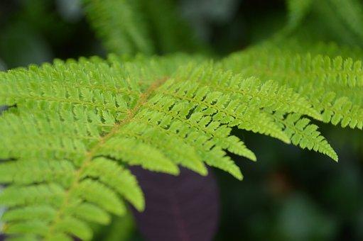 Leaf, Fern, Green, Nature, Plants, Environment, Foliage
