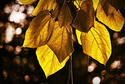 Leaf, Foliage, Twig, Branch, Tree, Vein, Pattern