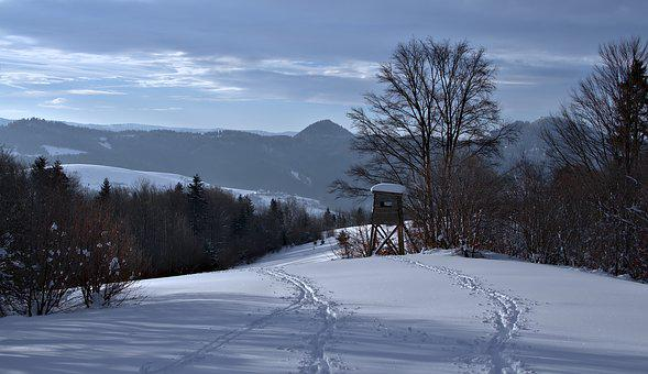 Winter, Forest, Mountains, Traces, Shed, Hunting, Snow