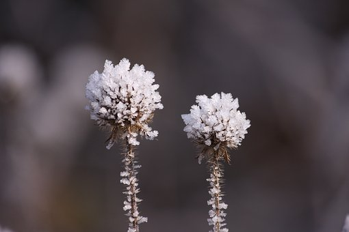Eiskristalle, Snow, Winter, Cold, Ice, Frost, Frozen
