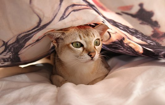 Cat, Bed, Bed Sheet, Relax, Bed Linen, Hiding Place