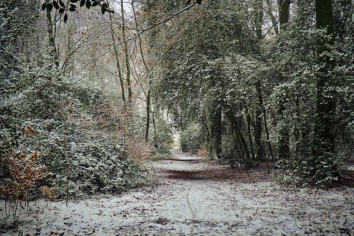 Forest, Trees, Nature, Landscape, Path, Secret, Light