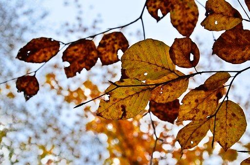 Leaf, Fall, Nature, Tree, Colorful, Texture, Foliage