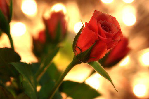 Valentine's Day, Rose, Flowers, Bouquet, Petals, Love