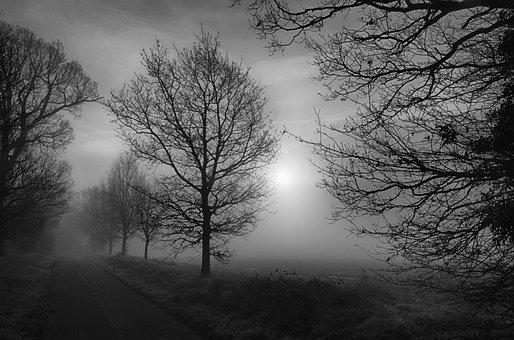 Trees, Misty, Fog, Scary, Foggy, Landscape, Mystery