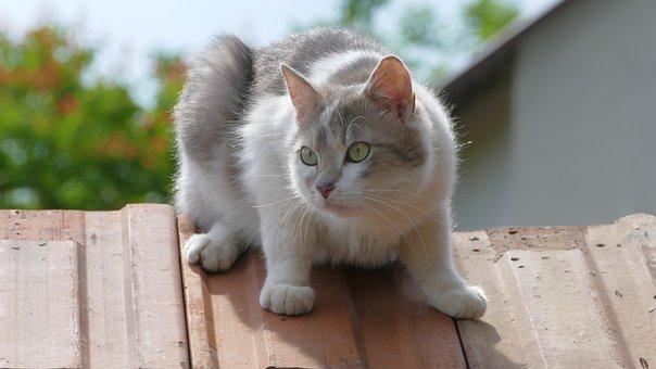 Cat, Tomcat, Kitten, Pet, Favorite, Dachowiec