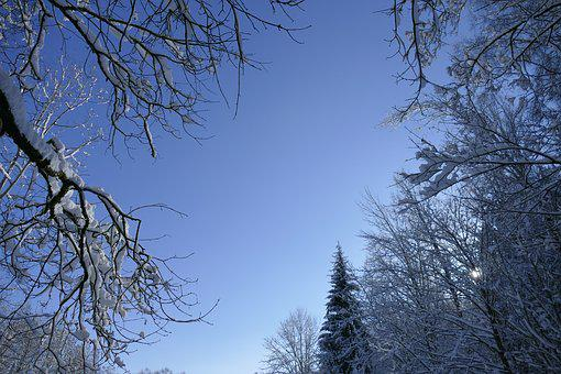 Winter, Tree, Woods, Forest, February, Ice, Snow, Sky