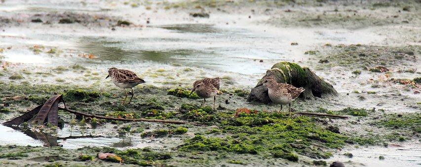 Outdoor, Wet, Land, Mashes, Migratory, Bird, Sand