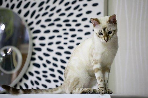 Bengal Cat, Baby Cats, White Cat, Bengal, Pets, Cat