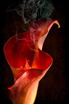 Calla Lily, Flower, Calla, Lily, Flora, Petal, Orange