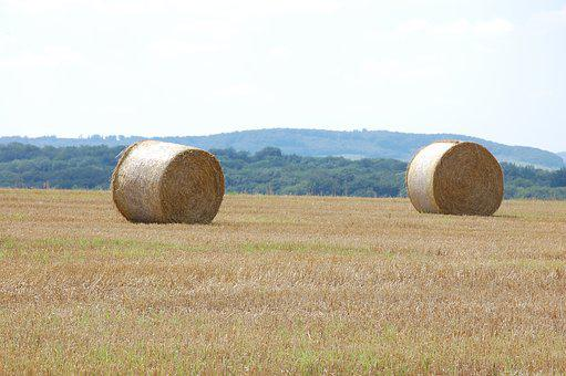 Summer, Straw Bales, Agriculture, Straw, Harvest, Field