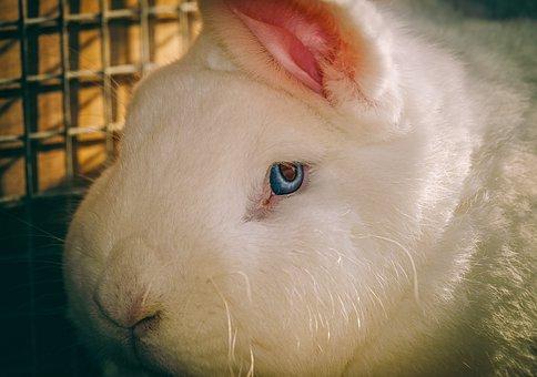 Rabbit, Hare, Animal, Close Up, Fur, White, Eye, View