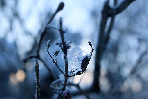 Ice, Ice Ball, Snowball, Branch, Winter, Spring