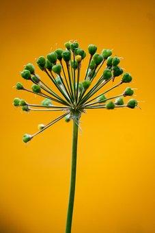 Leek, Green, Orange, Plant, Decoration, Color, Contrast