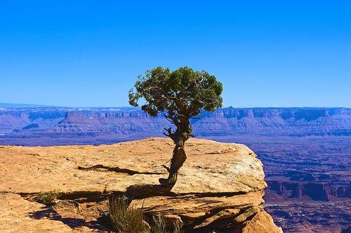 Lone Utah Juniper, Desert, Rock, Canyonlands, National