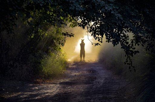 Silhouette, Mist, Fog, Trees, Man