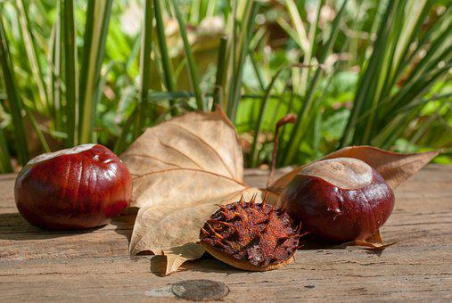 Chestnut, Fruit, Leaf, Nature, Thorny, Horse Chestnut