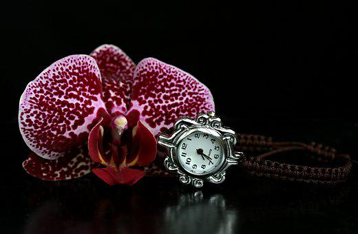 Orchid, Watch, Gem, Flower, Plant, Presentation