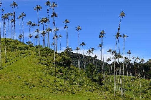 Quindio, Nature, Landscapes, Colombia, Trees, Cocora