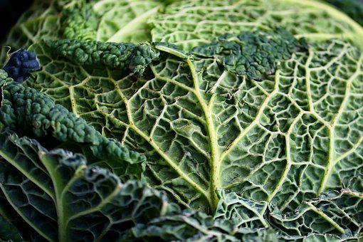 Savoy, Kohl, Vegetables, Healthy, Savoy Cabbage, Eat
