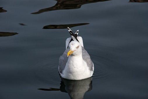 Trut, Seabird, Coast, Seagull, Nature, Summer, Bird
