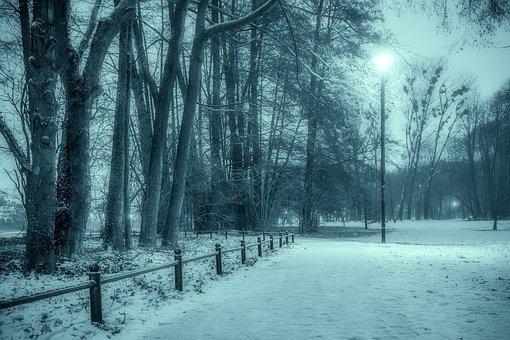Winter, Park, Snow, The Fog, Tree, Municipal, Night