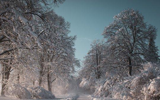 Winter, Landscape, Snow, Wintry, Sun, Trees