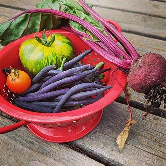 Beet, Tomato, Beans, Colander, Vegetables, Garden, Food