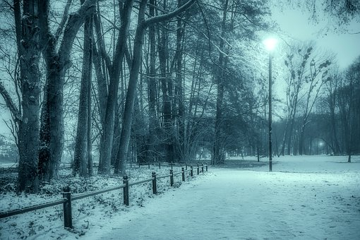 Winter, Park, Snow, The Fog, Tree, Municipal, Night